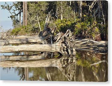 Fallen Trees Reflected In A Beach Tidal Pool Canvas Print by Bruce Gourley