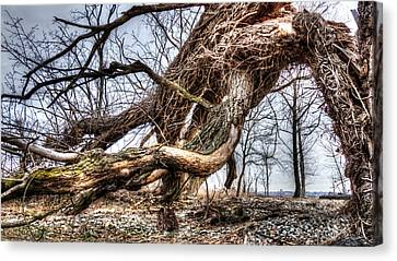 Fallen Twisted Giant Canvas Print
