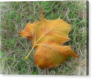 Fallen Canvas Print by Wendy J St Christopher