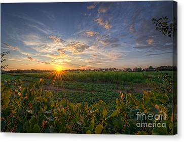 D700 Canvas Print - Falling Below The Horizon  by Michael Ver Sprill