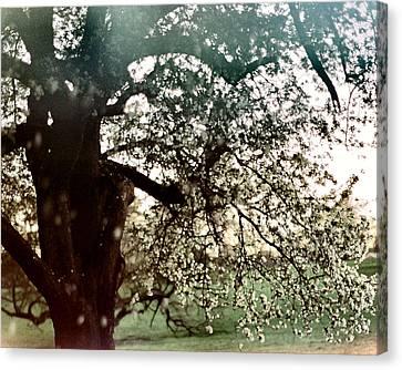 Falling Blossoms Canvas Print