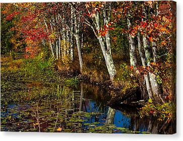 Falling Into The Colors Canvas Print by Karol Livote