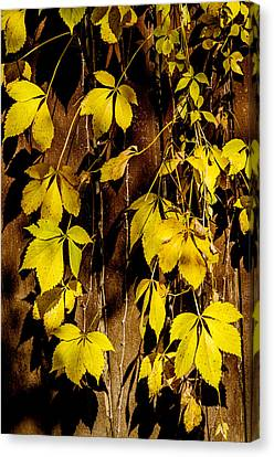 Falling Leaves Canvas Print by Celso Bressan