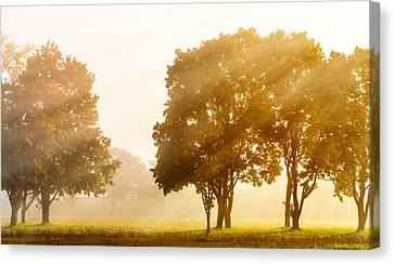 Falls Delight Canvas Print by James Heckt