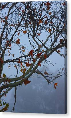Canvas Print featuring the photograph Fall's Final Colors by Richard Stephen