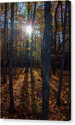 Fall's Golden Sunshine Canvas Print by Laurel Butkins