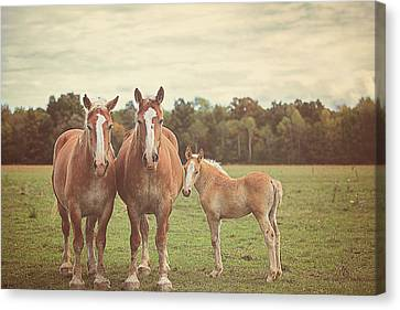Family Canvas Print by Carrie Ann Grippo-Pike