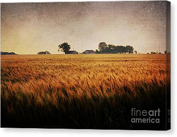 Family Farm Canvas Print by Lisa Holmgreen