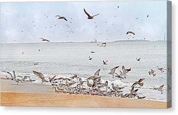Family Flock  Canvas Print