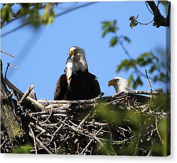 Family Lunch Canvas Print by Bruce  Morrell