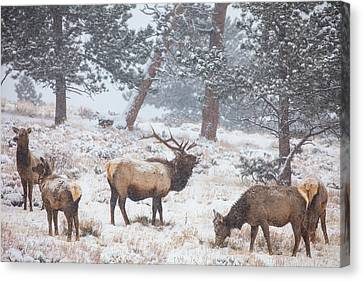 Winter Trees Canvas Print - Family Man by Darren  White