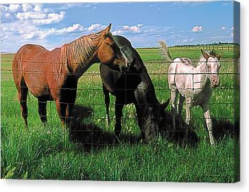 Family Meal Canvas Print by Terry Reynoldson