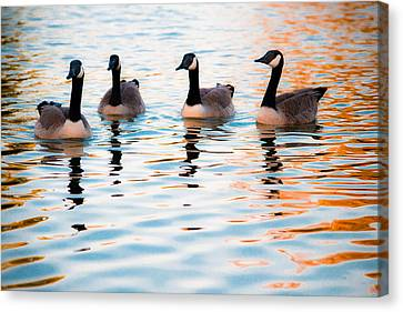 Family Of Geese Canvas Print by Shelby  Young