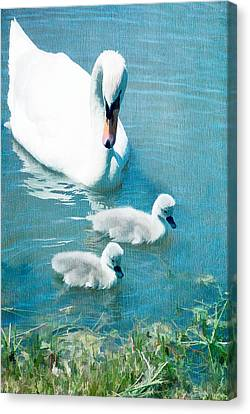 Family Of Swans At The Market Common Canvas Print