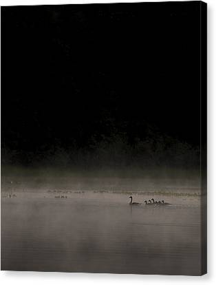 Ducklings Canvas Print - Family On The Lake by Aaron Bedell