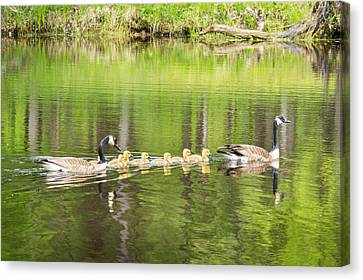 Family Outing Canvas Print by Bill Pevlor