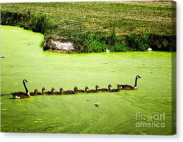 Family Outing Canvas Print by Gerlinde Keating - Galleria GK Keating Associates Inc