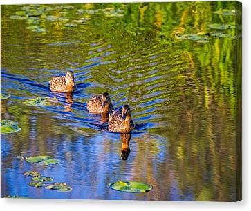 Family Outing On The Lake Canvas Print