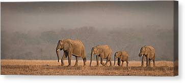 Elephants Canvas Print - Family Outing by Peter O'hara