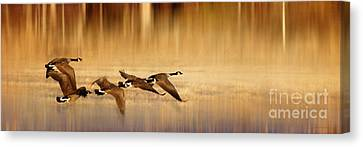 Canadian Marsh Canvas Print - Family Outing  by Beve Brown-Clark Photography