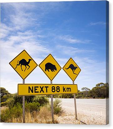 Famous Australian Sign Camels Wombats Kangaroos Canvas Print by Colin and Linda McKie