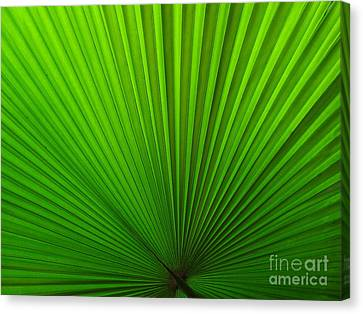Canvas Print - Fan Palm by Ranjini Kandasamy