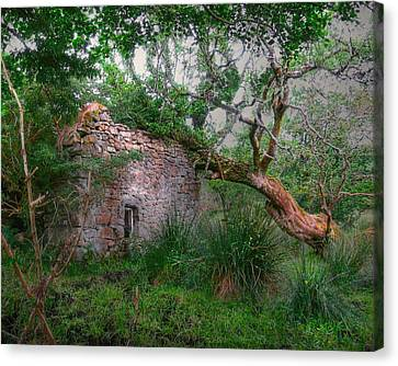 Fanciful Forest Canvas Print by Kandy Hurley