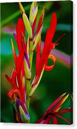 Fancy Bloom Canvas Print