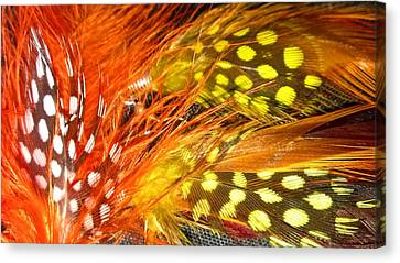 Fancy Feathers Canvas Print by Catherine Ratliff
