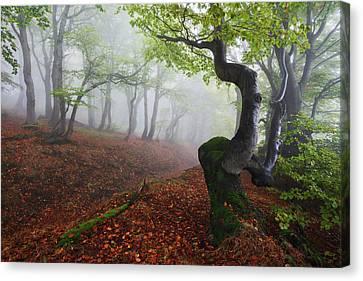 Fangorn Forest Canvas Print