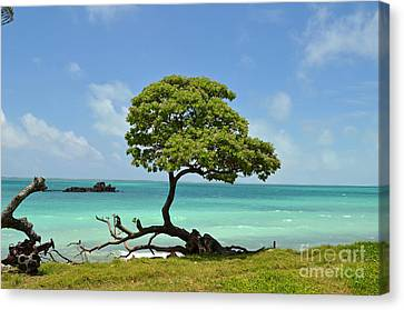 Fanning Tree On Beach Canvas Print
