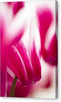 Close Focus Floral Canvas Print - Fantasia by Anne Gilbert