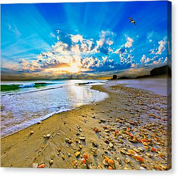 Canvas Print featuring the photograph Fantasy Art-birds Flying Into Sunset Over Shell Covered Beach by Eszra