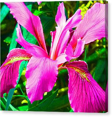Fantasy Iris Canvas Print by Margaret Saheed