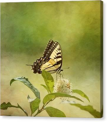 Fantasy Canvas Print by Kim Hojnacki