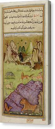 Farisa The Pious Jackal Canvas Print