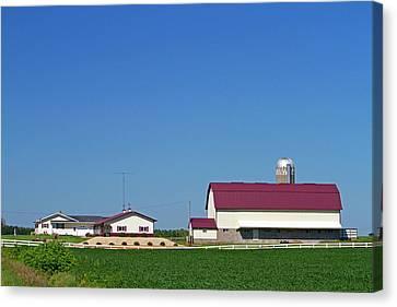 Farm And Soybean Crop North Of Eau Canvas Print
