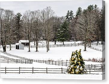 Canvas Print featuring the photograph Horse Farm And The Tree by Mike Ste Marie