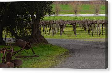 Farm And Vineyard Canvas Print by Cheryl Miller