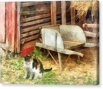 Farm Cat Canvas Print by Susan Savad