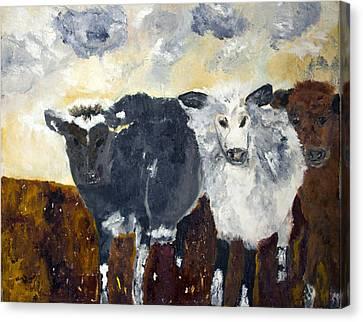 Farm Cows Canvas Print