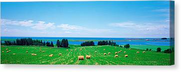 Bales Canvas Print - Farm Field Prince Isl Canada by Panoramic Images