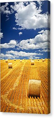 Farm Field With Hay Bales In Saskatchewan Canvas Print by Elena Elisseeva
