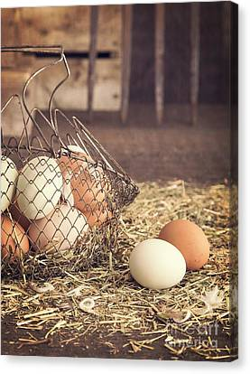 Farm Fresh Eggs Canvas Print by Edward Fielding