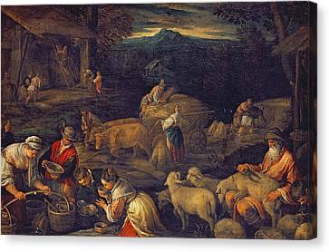 Farm Interior Or Shearing Sheep Oil On Canvas Canvas Print by Jacopo Bassano
