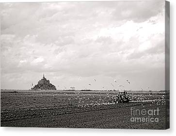 Flying Seagull Canvas Print - Farm Work At Mont Saint Michel by Olivier Le Queinec