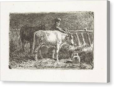Farmer Between Two Cows In A Manger In A Stable Small Canvas Print by Jan Vrolijk