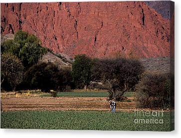 Farmer In Field In Northern Argentina Canvas Print by James Brunker