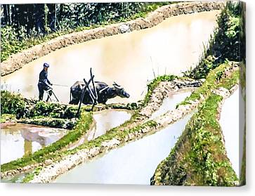 Chinese Peasant Canvas Print - Farmer Plowing Terraced Rice Fields by Lanjee Chee