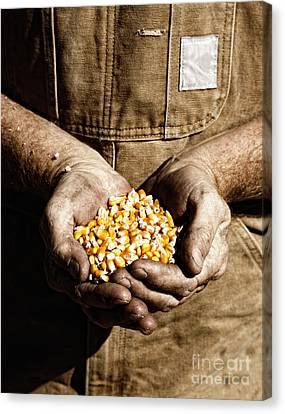 Canvas Print featuring the photograph Farmer's Hands With Seed Corn by Lincoln Rogers